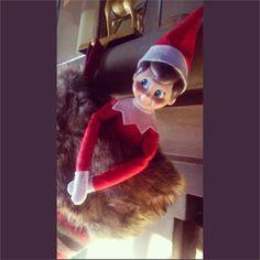 Up to no good ;) #elfontheshelf #tinsel #stockingstuffer #rancheyyc