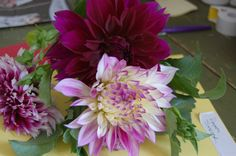 Dinner plate dahlias the size of your fist. From the garden.