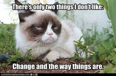 Grumpy Thoughts - LOLcats is the best place to find and submit funny cat memes and other silly cat materials to share with the world. We find the funny cats that make you LOL so that you don't have to. Gato Grumpy, Grumpy Cat Meme, Grumpy Cat Quotes, Funny Cat Memes, Funny Cats, Funny Animals, Cute Animals, Grumpy Kitty, Kitty Kitty