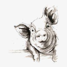 Sketch pig, Cartoon Pig, Hand-painted Pig, Piggy PNG Image
