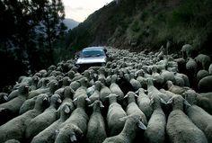 Esta me encanta, retrata algún que otro momento en el que todos nos hemos sentido .... coche?