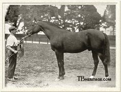 Minting(1883)(Colt)Lord Lyon- Mint Sauce By Young Melbourne. 4x5 To Birdcatcher, Glencoe, & Touchstone. 12 Starts 9 Wins 3 Seconds. Won Grand Prix De Paris(Fr), Seaton Delaval Plate (Eng), Prince Of Wales's S(Eng), Champagne S(Eng), 2nd 2000 Guineas(Eng). Died In 1909.