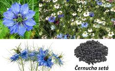 Hanukkah, Dandelion, Wreaths, Nigella, Flowers, Plants, Med, Door Wreaths, Dandelions