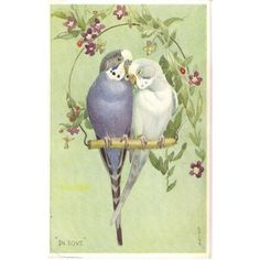 Lot Of 6 Parakeet vintage Valentines Lovebird Postcards | eBay ❤ liked on Polyvore featuring home, home decor and stationery