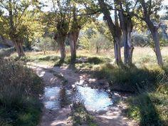 El colorido del otoño se puede ver ya en el Escuriza y en los montes de Crivillén