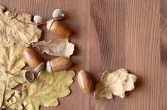 How to clean + prep acorns for home decor and crafts  {my first batch started growing mold within a few days of being in an apothecary jar...eww... so apparently I need to do this!}