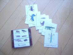 carte nomenclature insectes