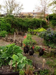 A chicken garden  No livestock allowed where I live, but dangit if it isn't the cutest!  Love the mini fence too.