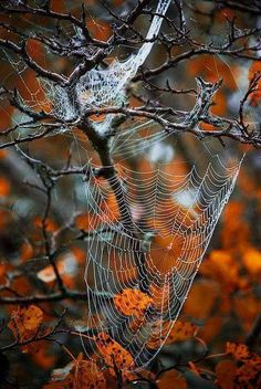 Spiderwebs are their own magical artforms.  Here, the unwary is trapped in their beauty...