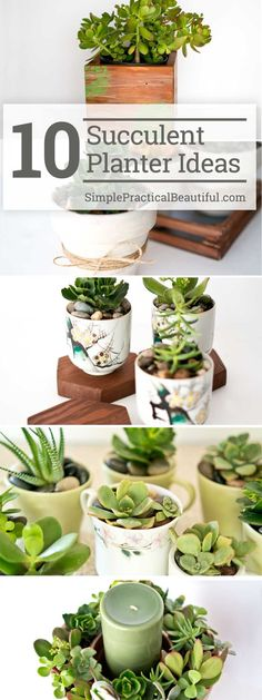 How to make your own DIY succulent planter | Ten  succulent gift ideas | Succulents in containers as home decor