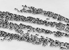 Sebastião Salgado - Nenets of the Siberian Arctic, Russia 1