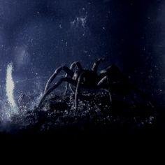 Me extraña araña...