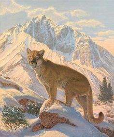 Mountain Lion Paintings and Prints | Home > Spirit of the West-Cougar by Lee Kromschroeder