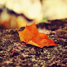 Autumn symphony by PawelMatys