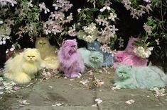 Love!!! Pastel Cats by Tim Walker