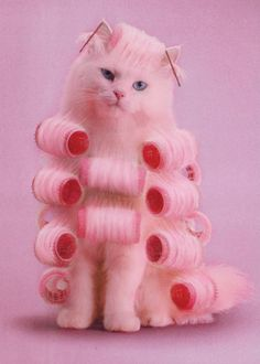 This is one of the funniest things I've ever seen! pink kitty