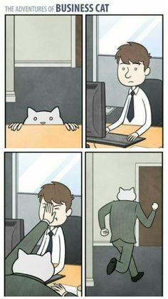 The Adventures of Business Cat #4 #gatos #cat