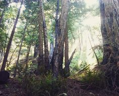 There is a certain #serenity that can only be found in #nature. When it calls to you, answer. You'll be glad you did. 🌲🌳🌞 . . . #forest #trees #woods #peace #tranquility #pinetrees #pines #solitude #mothernature #motherearth #gaia #BigSur #california #wildlife #calilife #sunflare #sunlight #explorer #adventure #adventurer #hiker #hiking #outdoors #naturelover #savetheplanet #wanderer #travel #picoftheday #montereylocals - posted by Laura Brunkala https://www.instagram.com/lbrunkala. See…