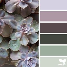 today's inspiration image for { succulent hues } is by @wild_rubus ... what can i say about Caroline's photo except that it absolutely stole my breath ... insane. beauty. ... you should click over & explore Caroline's feed ~ she is a talented Florist with a gifted eye for capturing the beauty surrounding her ... thank you Caroline for another inspiring #SeedsColor image share!