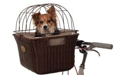 Ride around with the most fashionable dog bike basket ever. | 28 Ingenious Things For Your Dog You Had No Idea You Needed