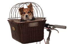 28 Cosas que no tenías idea que necesitabas para tu perro