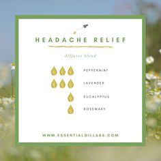 Headache Relief Diffuser Blend by Essential Oil Labs Headache Relief Diffuser Blend by Essential Oil Labs using peppermint essential oil, lavender essential oil, eucalyptus essential oil and rosemary essential oil. Peppermint oil for headache. Stress Relief Essential Oils, Calming Essential Oils, Essential Oils For Babies, Essential Oils For Headaches, Essential Oil Diffuser Blends, Migraine Essential Oil Blend, Eucalyptus Essential Oil Uses, Essential Oil Blends For Colds, Peppermint Essential Oil Uses