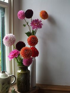 pom pom dahlias...if you don't do succulents, thought this was pretty! @Jordan Hall
