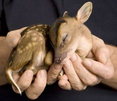 Awwwwwwwwww. I totally want a baby deer. In fact, i want a whole zoo of mini animals. Now