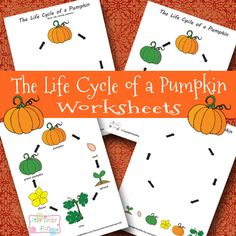 This FREE Pumpkin Life cycle Pack from Itsy Bitsy Fun includes the following worksheets:  Worksheet with complete pumpkin cycle with