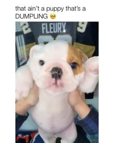 Cute Baby Puppies, Baby Dogs, Doggies, Cute Dogs, Cute Babies, Cute Puppy Videos, Cute Animal Videos, Cute Animal Pictures, Cute Little Animals