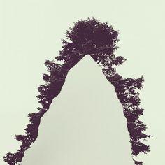 Torn paper over pine tree by Brock Davis