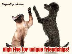 HIGH FIVE FOR UNIQUE FRIENDSHIPS!!!