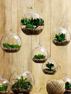 Si quieres estar rodeada de la naturaleza sin salir de tu hogar, no dudes en usar algunas plantas pa... - Pinterest