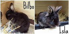 Bilbo & Isla: A Rescue Story
