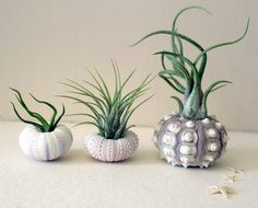 Inspiration:  clever planters