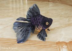 Kuro demekin by demetyoubi.deviantart.com on @deviantART  I don't know what this kind of fish is called, but they are the undeniably the pug dogs of the pet fish world.