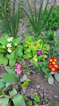 mart çiçeği