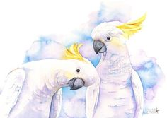 Here you will find a selection of bird prints that I have painted in watercolour. Watercolor Bird, Watercolor Animals, Watercolor Paintings, Original Paintings, Watercolours, Bird Paintings, Parrot Painting, Australian Birds, Cockatoo
