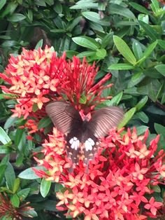 butterfly and flowers Butterfly, Meet, Flowers, Plants, Animals, Animaux, Flora, Animal, Bow Ties