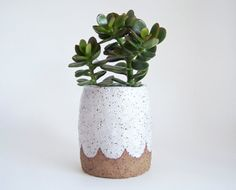 Scalloped Pottery Planter This stoneware planter/pot has been hand made by me from earthy textured clay using the traditional methods of pinching and coiling. It has been decorated with a white glaze and high fired giving it strength and durability. Perfect for succulents, a cactus plant or to store pencils, paint brushes etc. It is completely vitreous so it can also be used a vase.