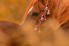 Portfolio professionelle Pferdefotografie - Pferde im Studio - Hunde im Studio | Pferdefotografie München | Rahlmeier
