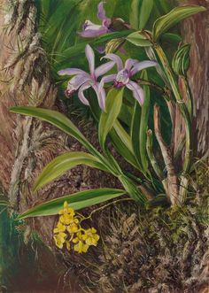 a Marianne North Painting at Kew Gardens Your Paintings, Beautiful Paintings, Landscape Paintings, Plant Illustration, Botanical Illustration, Botanical Drawings, Botanical Prints, Kew Gardens, Botanical Gardens