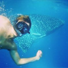 Swimming with whale sharks, australia travel, western australia, come fly w Australia Travel, Western Australia, Terra Australis, Swimming With Whale Sharks, Vacation Trips, Vacation Spots, Vacations, Family Adventure, Video Photography