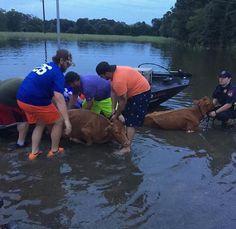 #Alllivesmatter #LouisianaStrong #LouisianaFlood #CajunNavy