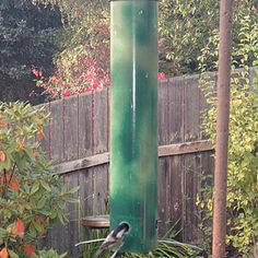 "How To Build A ""flexi-perch"" Squirrel-proof Birdfeeder For $10 Or Less"