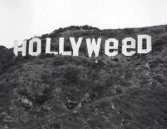 Hollyweed#