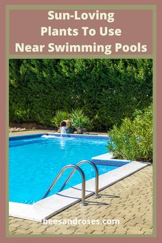 Once your pool is in, like everything else, it looks better with a few finishing touches. Plants are like lipstick to a red dress. It's that POP that makes everything perfect. Read the post for a list of plants to use near swimming pools for color, privacy and of course that spectacular POP. #plantstousenearswimmingpools #plantsforlandscapenearswimmingpools #privacyplants #colorfulplants #beesandrosesblog Full Sun Landscaping, Swimming Pool Landscaping, Farmhouse Landscaping, Low Maintenance Landscaping, Front Yard Landscaping, Landscaping Ideas, Swimming Pools, Diy Backyard Fence, Backyard For Kids