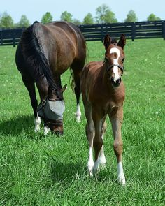 2017 Constitution colt from Ithinkisawapudycat. 1/2 brother to Sweet Loretta