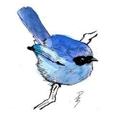 Watercolour sketch of a Blue Fairy Wren - Pierce Braysher
