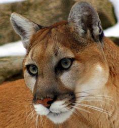 Bi-State Wildlife Hotline Inc.